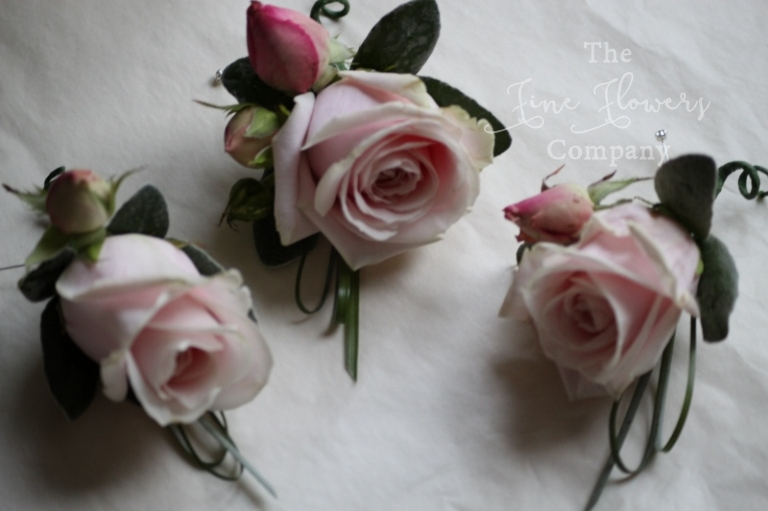 Sweet Avalanche rose buttonholes from Pembroke Lodge wedding