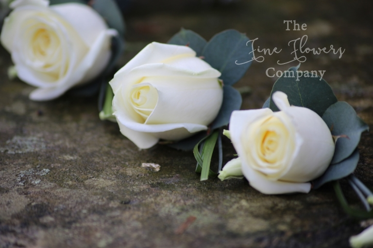 ivory Avalanche rose buttonholes with silvery eucalyptus foliage