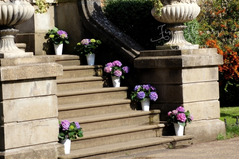 wedding flowers on steps at Hampton Court House, decorating steps with potted wedding flowers hydrangea plants, from wt Houseedding at Hampton Cour